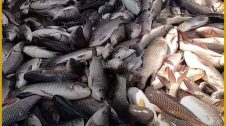 Fish farming business plan in hindi