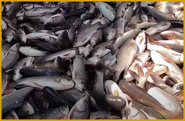 Fish farming business plan in hindi
