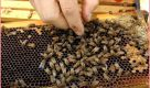 honey bee farming business hindi
