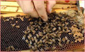 honey bee farming business hindi