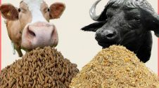 Cattle Feed manufacturing Business