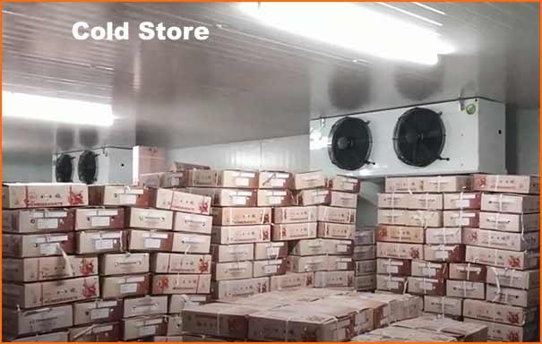 cold storage business plan hindi
