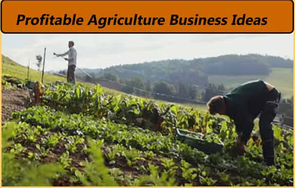 20 low and profitable agriculture business ideas hindi