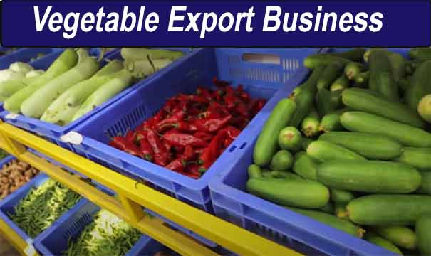 Vegetable export business in India